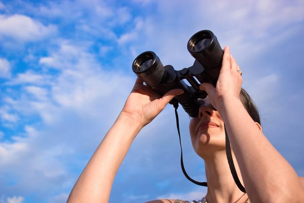 Go birding at the Henderson Bird Viewing Preserve
