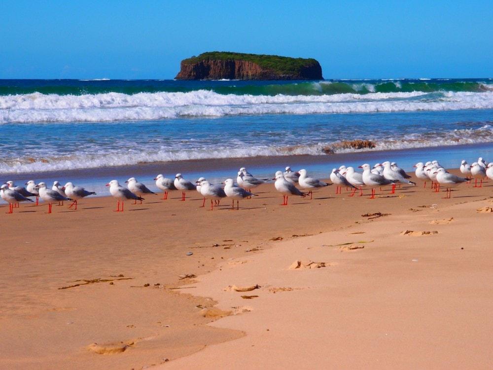Birds are often the only ones on the quiet Mystics Beach