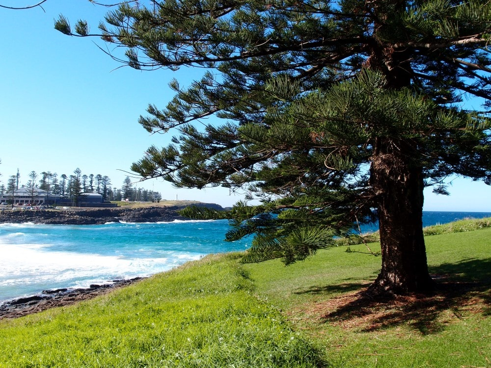There are nice trees and views at Kiama Surf Beach