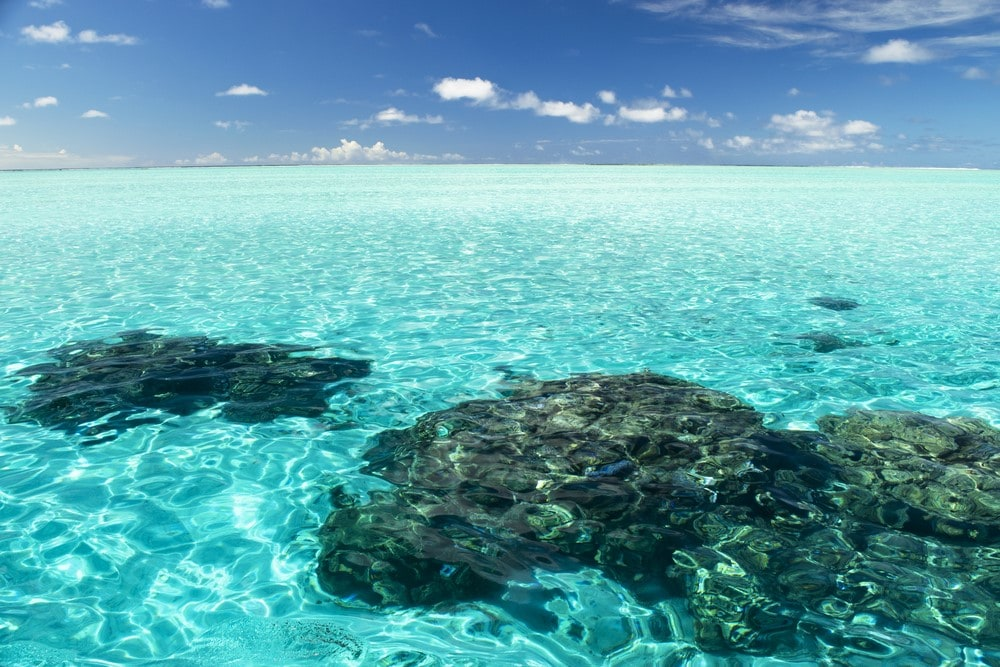 What to do in Bora Bora Snorkel in the coral gardens