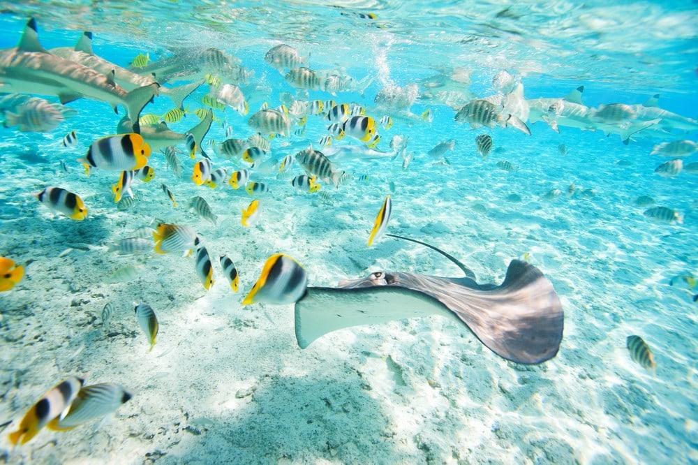 Bora Bora facts Bora Bora animals