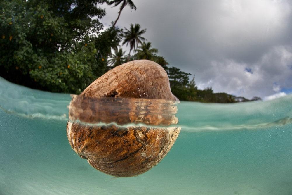 Bora Bora facts Coconuts