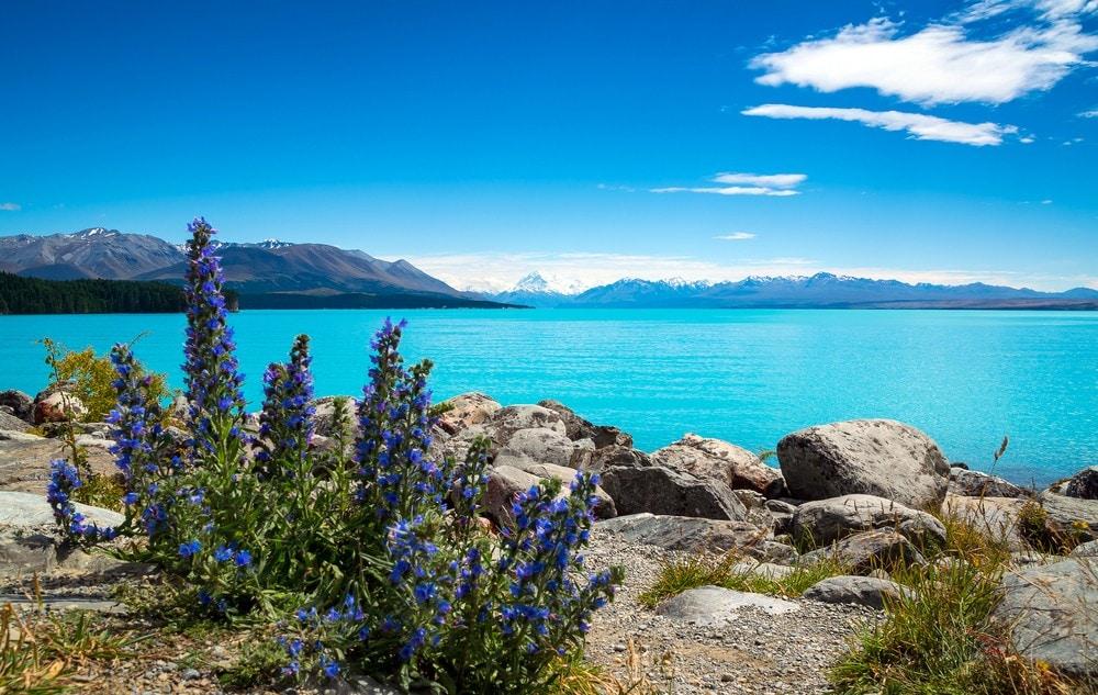 Things to Do in New Zealand South Island - Lake Pukaki