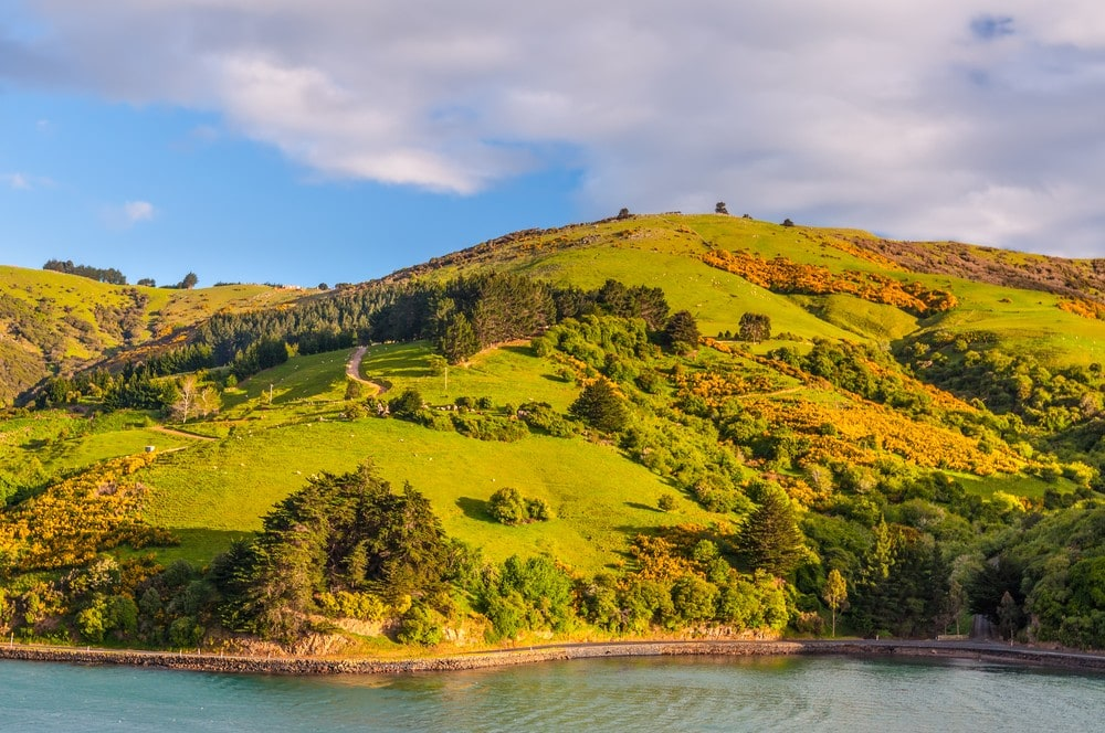 Things to Do in New Zealand South Island - Otago Peninsula