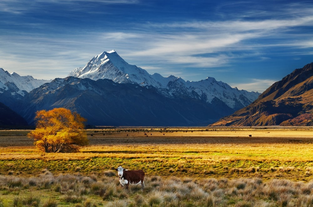 Things to Do in New Zealand South Island - Waipara Wine Tours