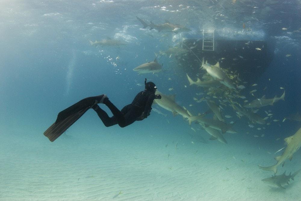 Sharks in Bora Bora Sharks feeding