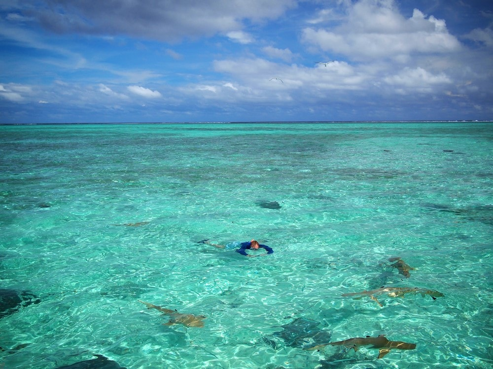 Sharks in Bora Bora Shark diving