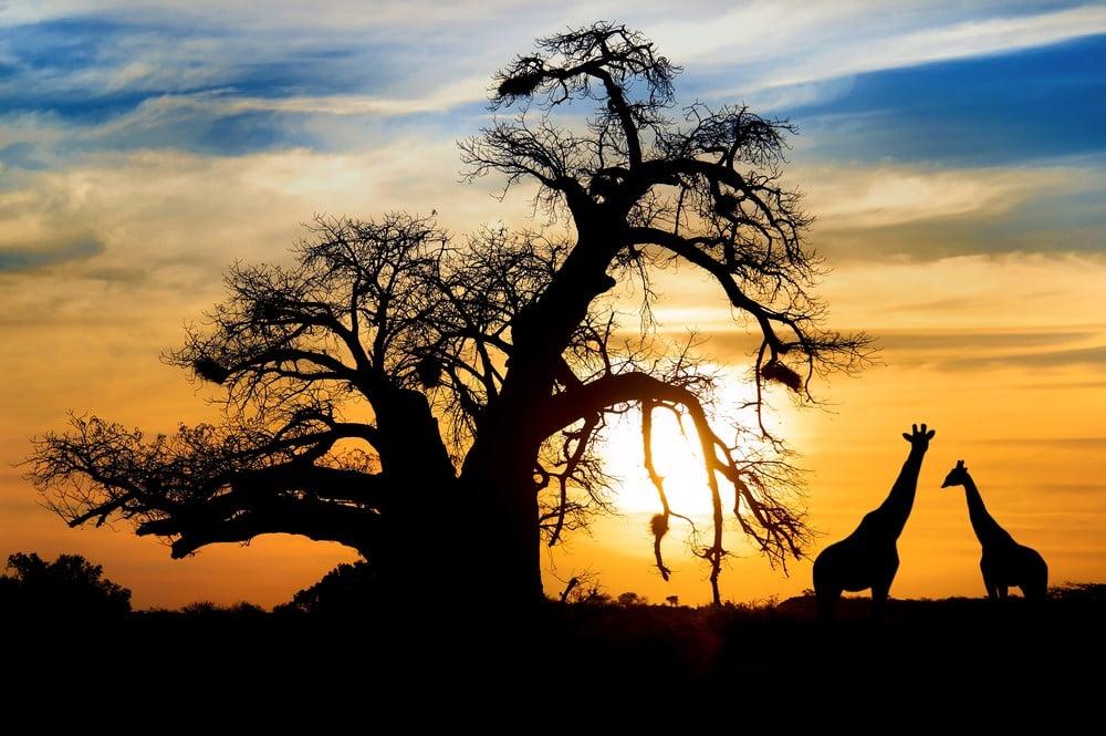 Summer destinations Botswana