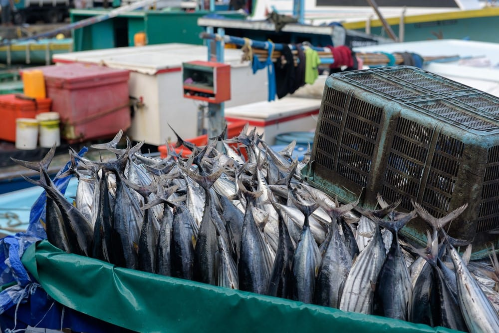 Activities and attractions on the Maldives Visit the fish market in Male