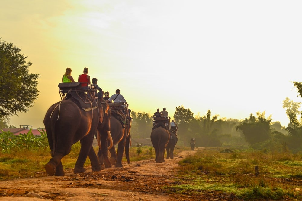 Things to do in India Ride an elephant