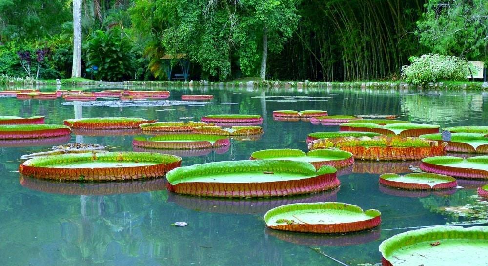 What to do in Rio de Janeiro Take a walk in Jardim Botanico