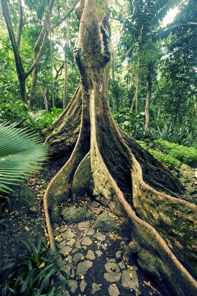 Things to do in Fiji Take a walk in the Garden of the Sleeping Giant