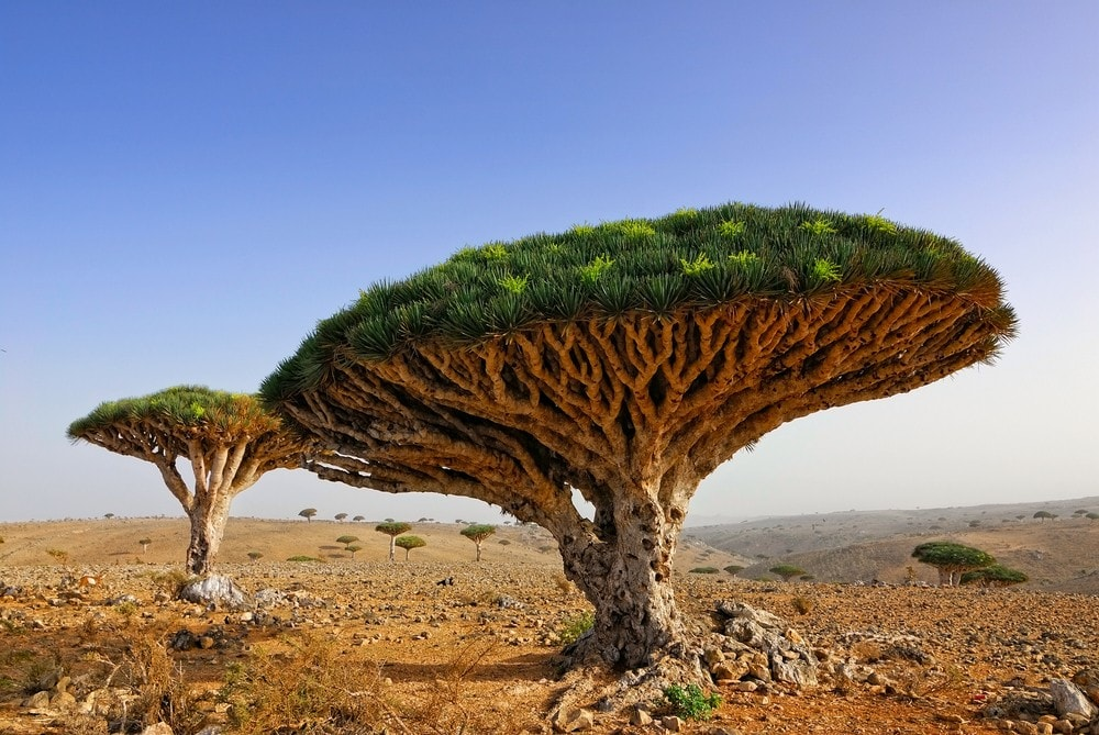 10 Most Remote Cities in the World - Socotra