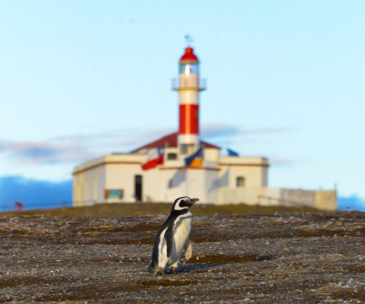 Isla Magdalena Lighthouse with penguin standing in front