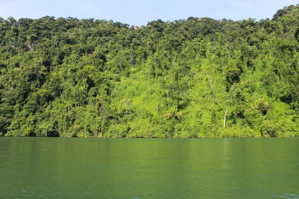 Rio Dulce with greenery