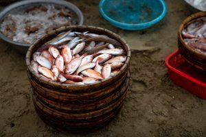 Fish selection Tokyo