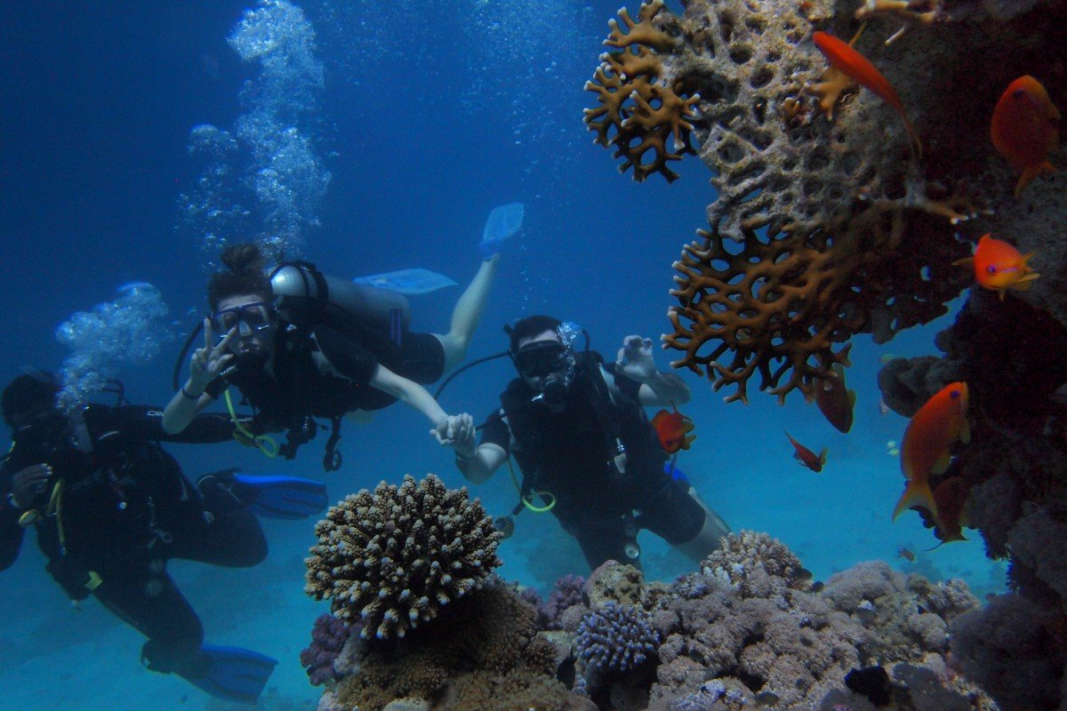 People diving and viewing marine life