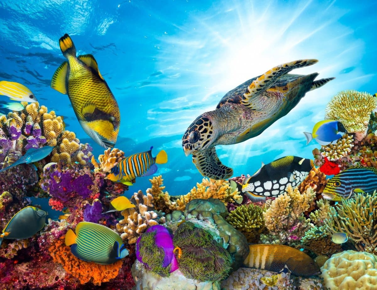 Colorful Coral Reefs with fish and sea turtle