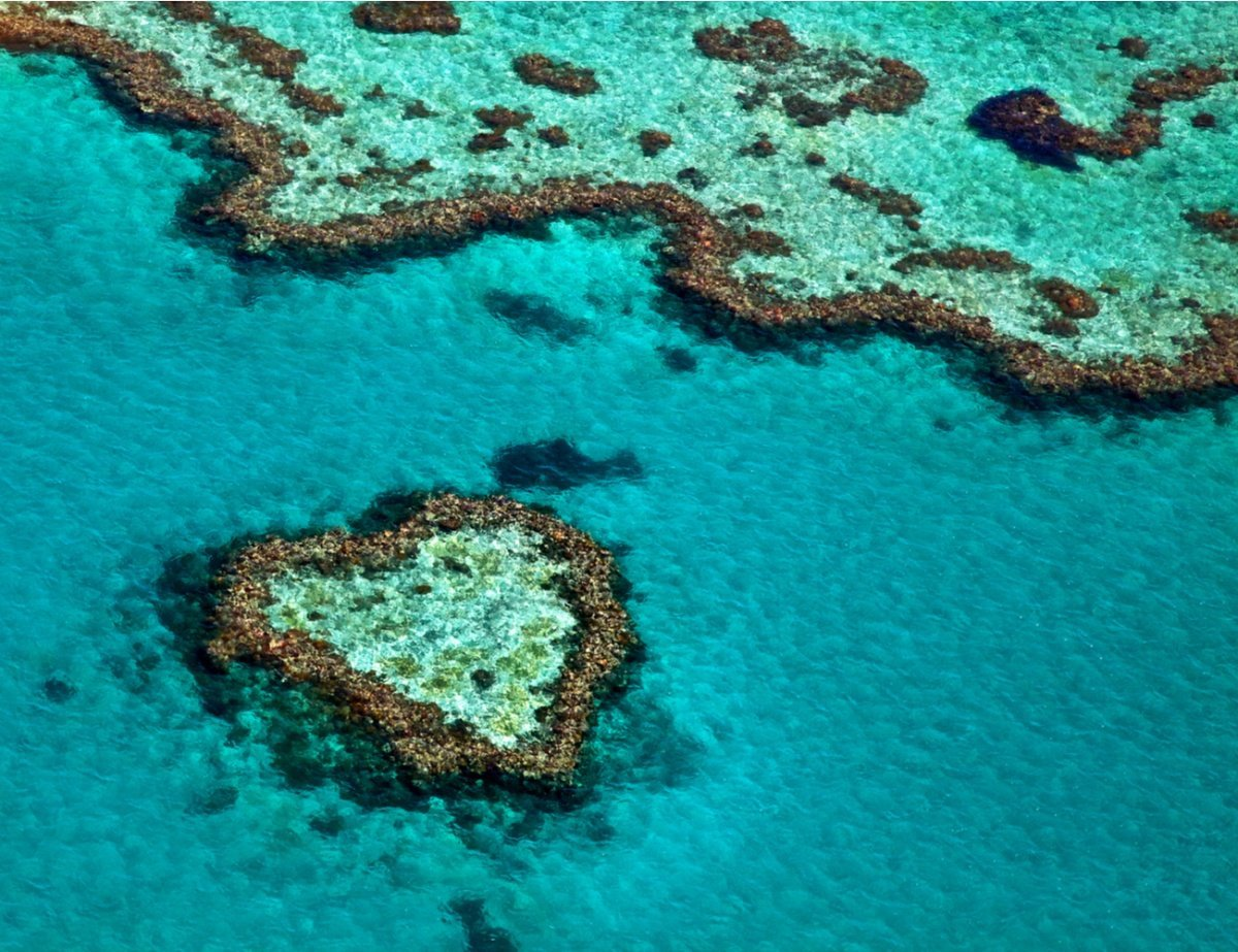 Aerial View of Great Barrier Reef - Walk to the reef